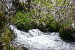 habitat truite qualité d'eau croissance pollution