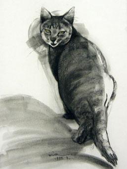 猫 猫衆 パステル画 ノラ パステル画教室
