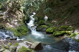 熊本と宮崎の県境の源流域渓