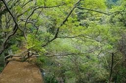 地元の渓流にて