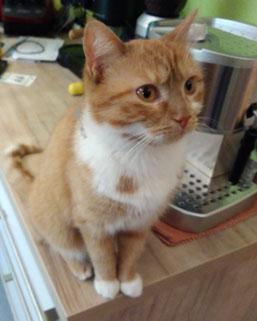 Blog - Der Frosch bloggt - Katze