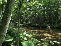 """ポロシリが、世界自然遺産に""""勝手に""""指定しているオショロコマの流れ。釣り人はこの釣りがしたくて毎年夏にやってくるHさん。"""