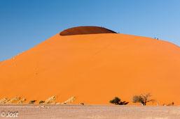 Düne 45 im Sossus Vlei im Namib Naukluft Park