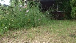 Blühwiesen unterstützen die Wildbienen.