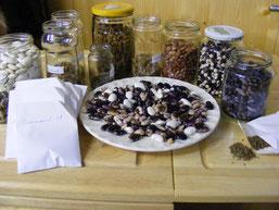 Die Sammlung an Bohnen unserer Kräuterfrau Marianne (kr-fr)