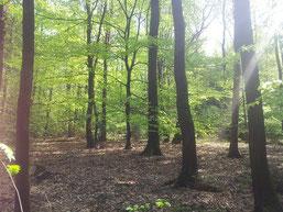 Die Laubwälder des Gebietes sind vielfältiger, als erwartet - von trocken-warm bis hin zu Feuchtwäldern - das zeigt die Schmetterlings-Fauna. (Foto: M. Gerhard)