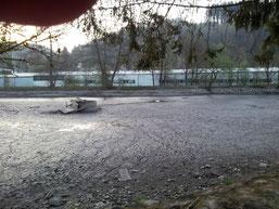 ein einzelner Schwan sitzt noch auf dem trocken gelegten Teich (peter)