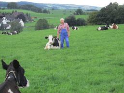 Betroffener Landwirt Ernst Jung mit seiner Kuhherde im Bereich der möglichen Trasse. (Foto: Kreisbauernschaft)