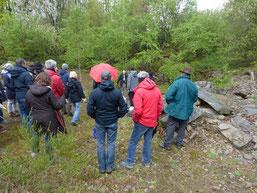 Steinbrüche sind vielfältige Lebensräume für spezialisierte Arten ( NABU TMC)