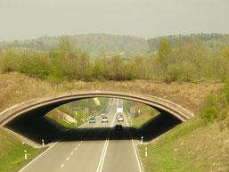 Grünbrücke / Wildwegeplan (NABU Netz.  M.Hermann)