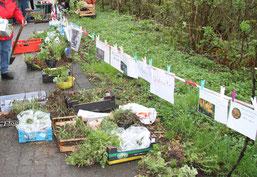 Breites Angebot an Tauschpflanzen (hu)