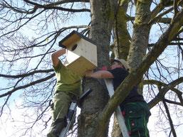 Neue Nisthilfen für den Waldkauz werden durch die NAJU Morsbach angebracht (cbu)