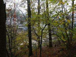 Einige Bäume müssen fallen, aber das Wäldchen bleibt erhalten