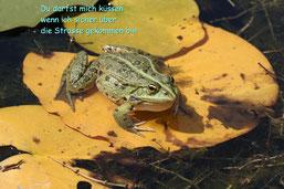 Küssen bitte erst nach dem Transport über die Strasse (Frosch / may)