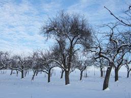 Streuobstwiese im Winterkleid, ein ökologisch wertvoller Lebensraum ( NABU)