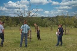 kritischer Blick auf die Bäume, Stephan Kolodzie berichtet auch über Misserfolge und Erfahrungen mit der Trockenheit (hu)