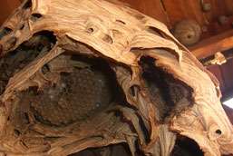 Blick in ein Nest. (Foto: NABU)