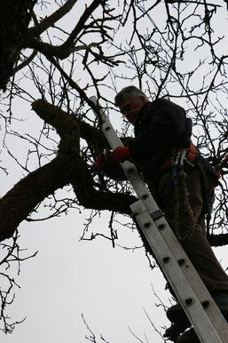oben in der Baumspitze hat man gute Aussichten (hu)