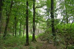 Wasserspeicher, Klimaregulierer, Erholungsgebiet,der Wald (Bild: Ufer)