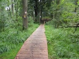 Birgelener Wald (Foto: O. Gellißen)