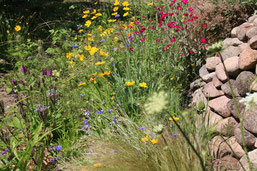 Trockenbeet mit Wildblumen Foto NABU/E. Neuling