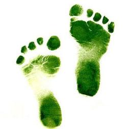 sustentabilidad, ecología, biodiversidad, ambiental, cambio climatico, sostenibilidad