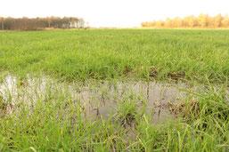 Die Moorwiesen sind wieder nasser geworden