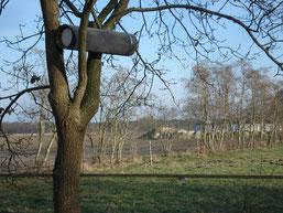 Steinkauzröhre (Foto: D. Niemann)