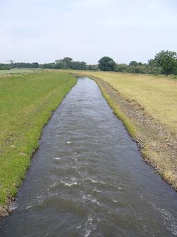 Die Neue Luppe ist ein Kanal, der die Nordwestaue entwässert. Die eingedeichten und begradigten Flüsse versorgen die Aue nicht mehr mit Hochwasser. Foto: Claudia Tavares