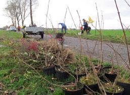 Verschiedene einheimische Gehölze wurden für die Anpflanzung am Feldweg ausgewählt.