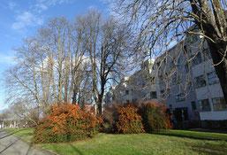 Feuerdorn, immergrüner Strauch und wertvolle Lebensstätte. Fotos: NABU Leipzig