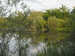 Wetrvoller Lebensraum in der Auenlandschaft: die Papitzer Lachen. Foto: René Sievert