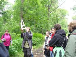 Geometrieunterricht im Wald: Mithilfe eines gleichschenkligen, rechtwinkligen Dreiecks kann die Wuchshöhe von Bäumen bestimmt werden.  Foto: Claudia Tavares