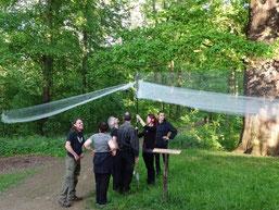 Um den nächtlichen Fledermausfang zu demonstrieren, wurde ein Stellnetz aufgebaut. Foto: Beatrice Jeschke
