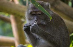 Bereichern Sie mit einem Dschungelabenteuer Ihre Reise nach Thailand.