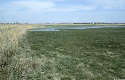 Feucht- und Nasswiesen, Lebensstätten gefährdeter Wiesen- und Watvögel. Ausgedehnte Schilfflächen, Lebensstätten für bedrohte Röhrichtvögel.