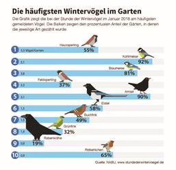 Infografik der häufigsten Vogelarten bundesweit ( NABU)