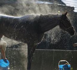 shampoo e sgroviglianti Cavallo