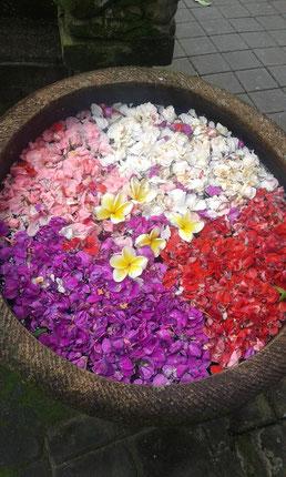 Offrandes à Bali : Samtosa. La gratitude !
