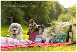 Ein Welpe kommt nicht allein. Elmondo ganz königlich. (Foto: www.traumtier-shooting.de)