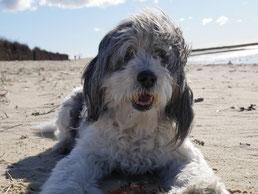 Ferienwohnung mit Hund in Duhnen