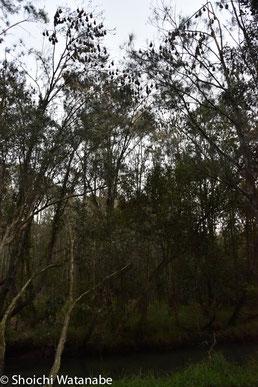 で、木がうっそうと茂る中を歩きます。