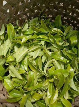 Feuilles de thé, thé de chine, thé oolong, boutique de thé en ligne