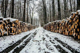 Bois coupé en forêt pour le bûcheron du Chateau belle epoque à Linxe 40