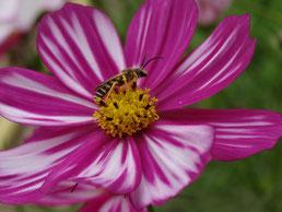 Immobile sur le pistil de la fleur