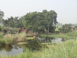 La beauté des petites fermes dans les rizières du Gange