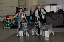 """GLORIS HEAVENLY HARMONY and GLORIS HARLEY DEVIDSON  - BEST FEMALE and BEST MALE OF THE BREED 2014 and both CHAMPION OF THE BREED 2014, Moscow, Russia, 20/12/14, """"Golden Collar"""""""