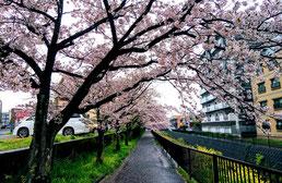 陶板浴ハイジ 桜