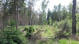 Forstliche Dienstleistungen der PLB: Holzeinschlag, Holzrückung, Aufforstung, Jungwuchs- & Bestandspflege etc.
