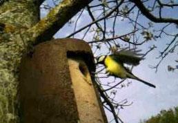 parcours ornithologique au bord de la rivière à la ferme des Ânes